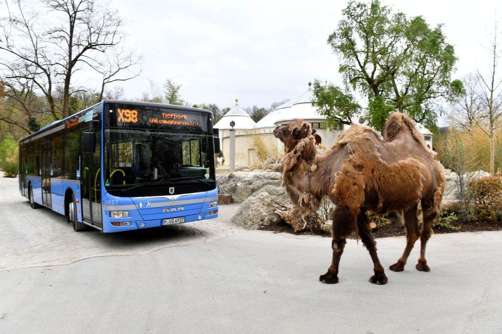 Neuer Tierpark Express X98 Ohne Umsteigen Ab Hauptbahnhof
